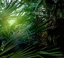 Light streaming through the palms by ♥⊱ B. Randi Bailey