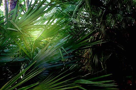 Light streaming through the palms by ?? B. Randi Bailey