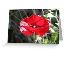 Vector Style Poppy With Natural Background  Greeting Card