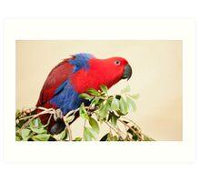 Hang On - Eclectus Parrot Art Print