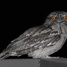 Tawny Frogmouth by Emma Holmes
