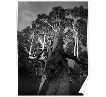 Scary Tree- Udy Road- Uraidla Poster