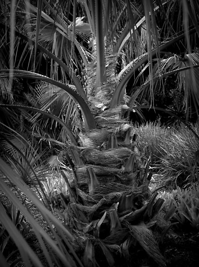 Scary Tree- Palm in the Botanic Gardens- Adelaide by Ben Loveday