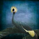 The Crowned Crane by swaby