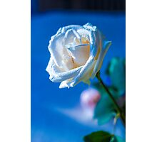 White rose Photographic Print