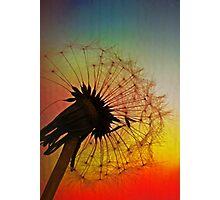 Dandelion Spectrum Photographic Print