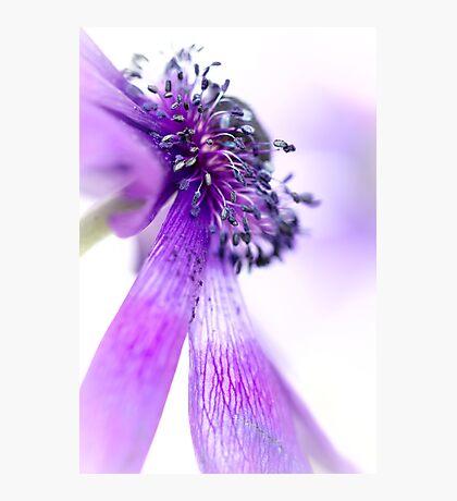 A Majestic Bend of the Purple Princess.. Photographic Print