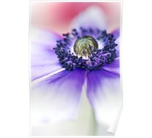 Flower Power flower.... Poster