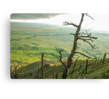Stormy Tree Canvas Print