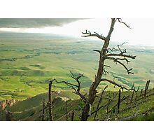 Stormy Tree Photographic Print