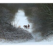 Dogs in Country Snow Scene Photographic Print