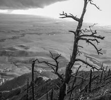 Stark Tree by mcstory