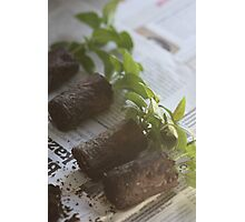 Seedlings Photographic Print