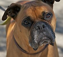 Bubba Da Boxer by DaveKoontz