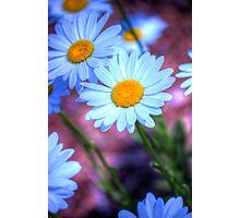 Daisy 4 Photographic Print