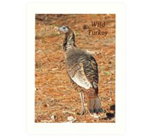 Wild Turkey Art Print