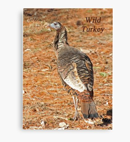 Wild Turkey Canvas Print