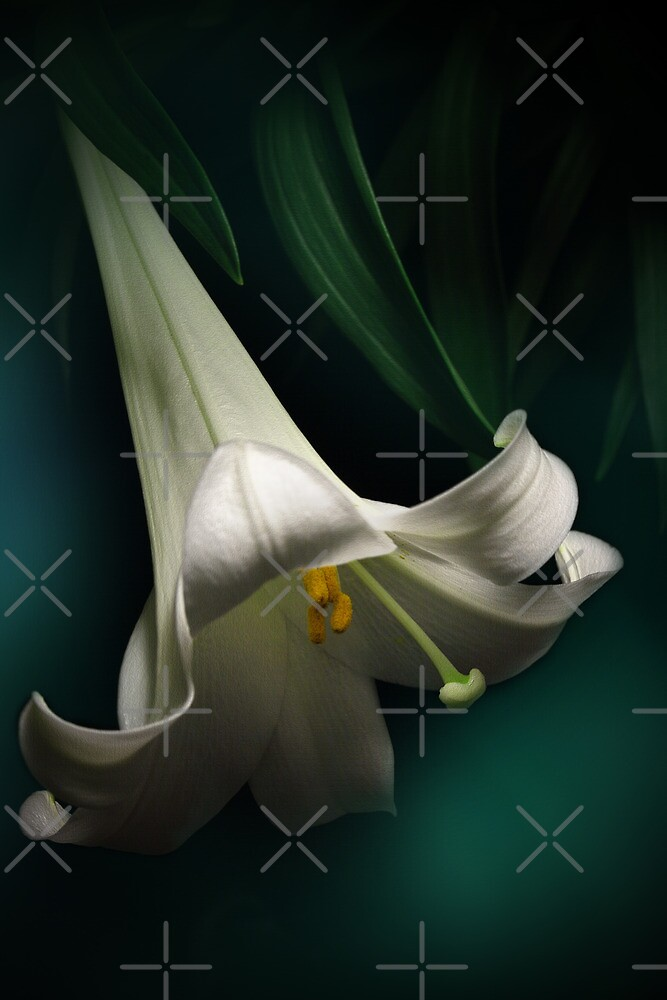 The Easter Lily by EbyArts