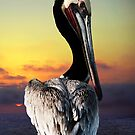 PELICAN KING FISHER by Larry Butterworth