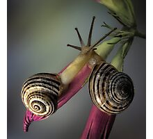 Snails in love Photographic Print
