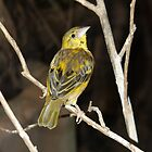 Yellow Birdy by liberthine01