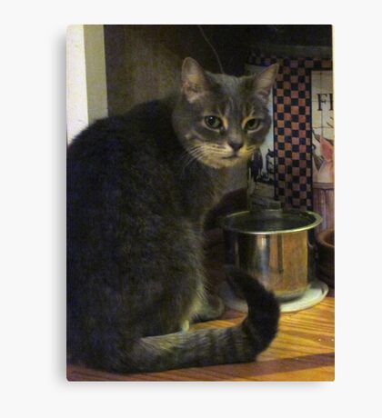 Lucy At The Water Bowl Canvas Print