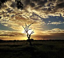 Darling Downs Sunset by Jock Anderson