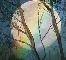 THE MOON, THE RAINBOW AND THE TREE'S by thedove63