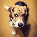 Mr. Beagle by Tyler Nardone