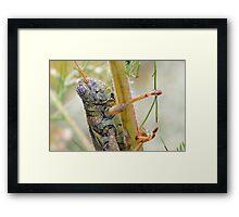 Dewey Grasshopper Framed Print