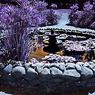 Lavender garden pool by Jane Neill-Hancock