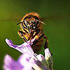 A Bee by gazzman1