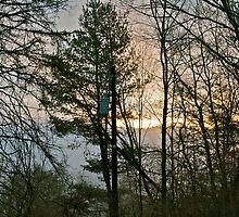 Dawn on the lawn by Carolyn Clark