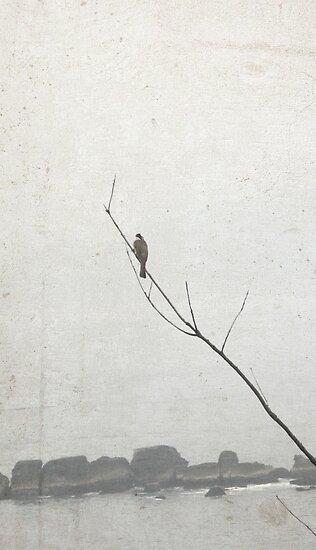 Solitude by Eric Fan