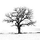 Lone tree by danforth