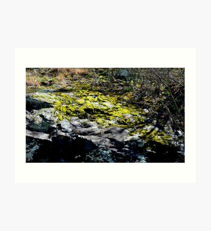 Moss on a rock Art Print