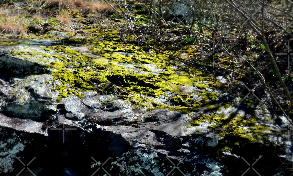 Moss on a rock by Scott Mitchell
