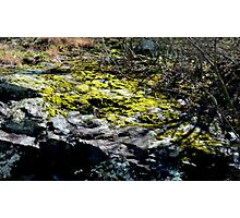 Moss on a rock Photographic Print
