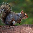 Squirrel by Daniela Pintimalli