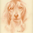 Lady - original pastel sketch of spaniel by Paulette Farrell
