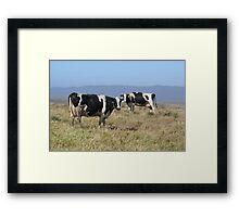 Holsteins Cows Framed Print