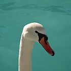 Swan Head by jojobob