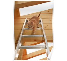 Ginger Tom Descending Ladder Poster