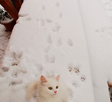 Kitten on Snowy Table by jojobob