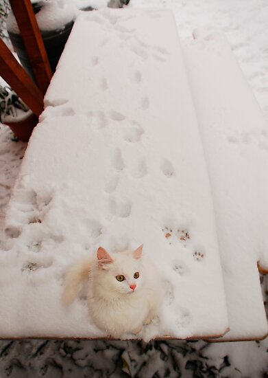 Kitten on Snowy Table by jojobob