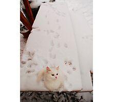 Kitten on Snowy Table Photographic Print