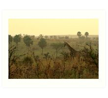 Early Morning Giraffe Art Print