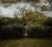 A Ladder to the Clouds by Nigel Bangert