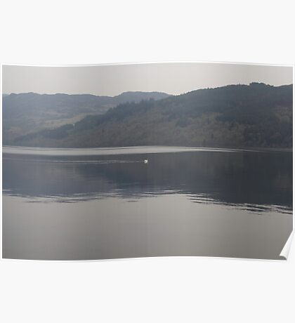 Distant view of a white goose swimming peacefully in the morning in Loch Ness in Scotland Poster