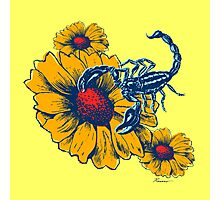 Scorpion Flowers Photographic Print
